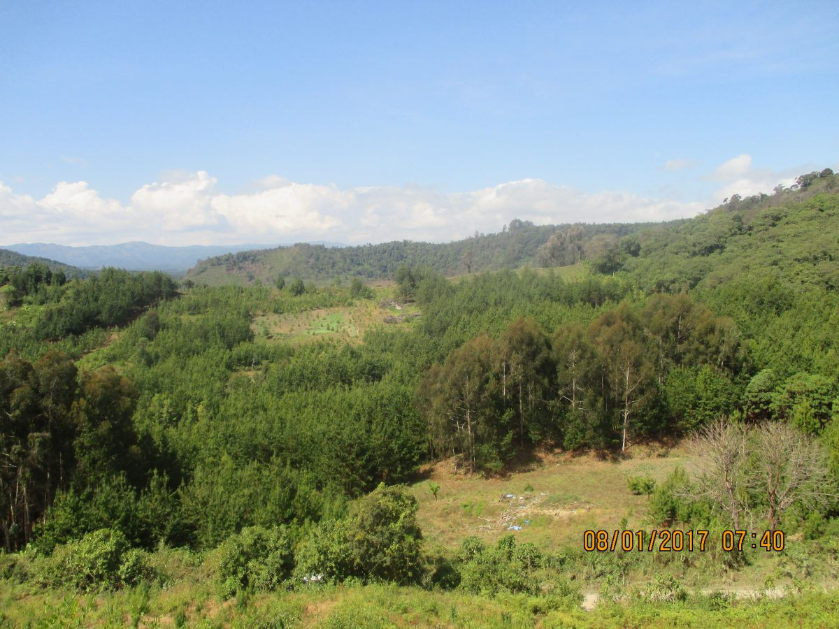 Woodlots located at forest edges. Mbeya, Tanzania