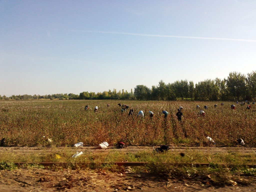 Figure 1: Cotton harvest in Uzbekistan