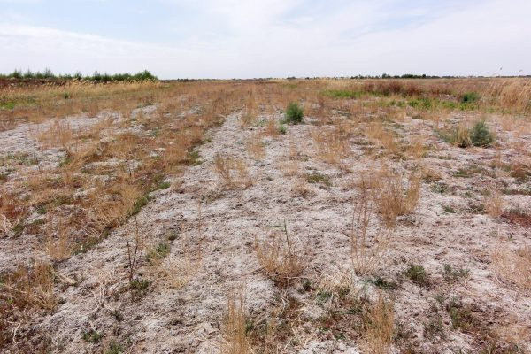 Figure 2 A field abandoned due to soil salinization (Khorezm, Uzbekistan)